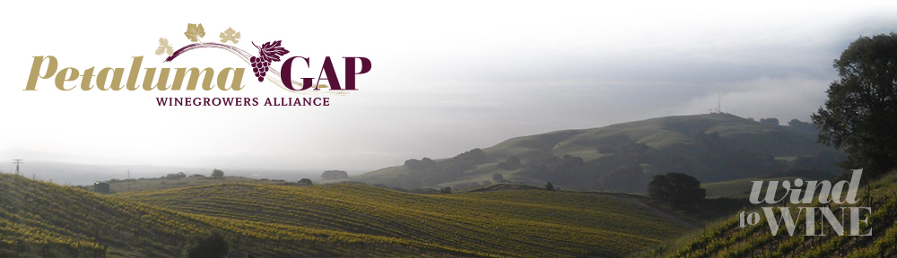 Petaluma Gap Winegrowers Alliance